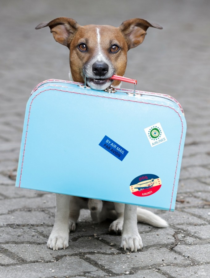 Traveling With Dogs | How to Travel With Dogs | What to Pack for Dogs | What to Bring for Fido