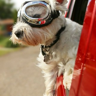 New Puppy Checklist | Pet Supplies for a Happy Homecoming