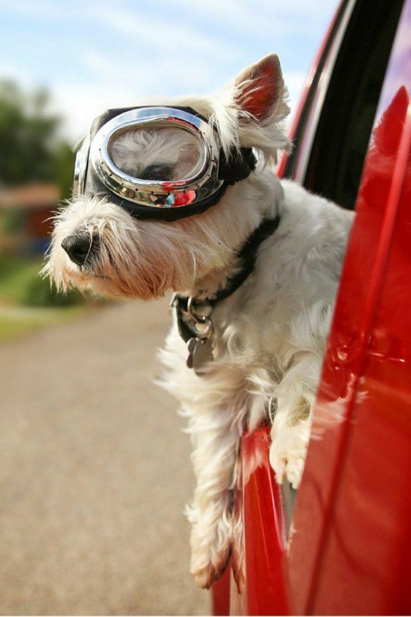 New Puppy Pet Supplies and New Puppy Checklist