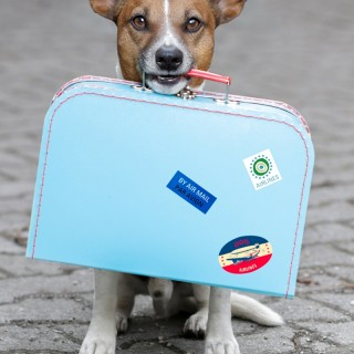 Traveling with Dogs: How to Pack for Fido